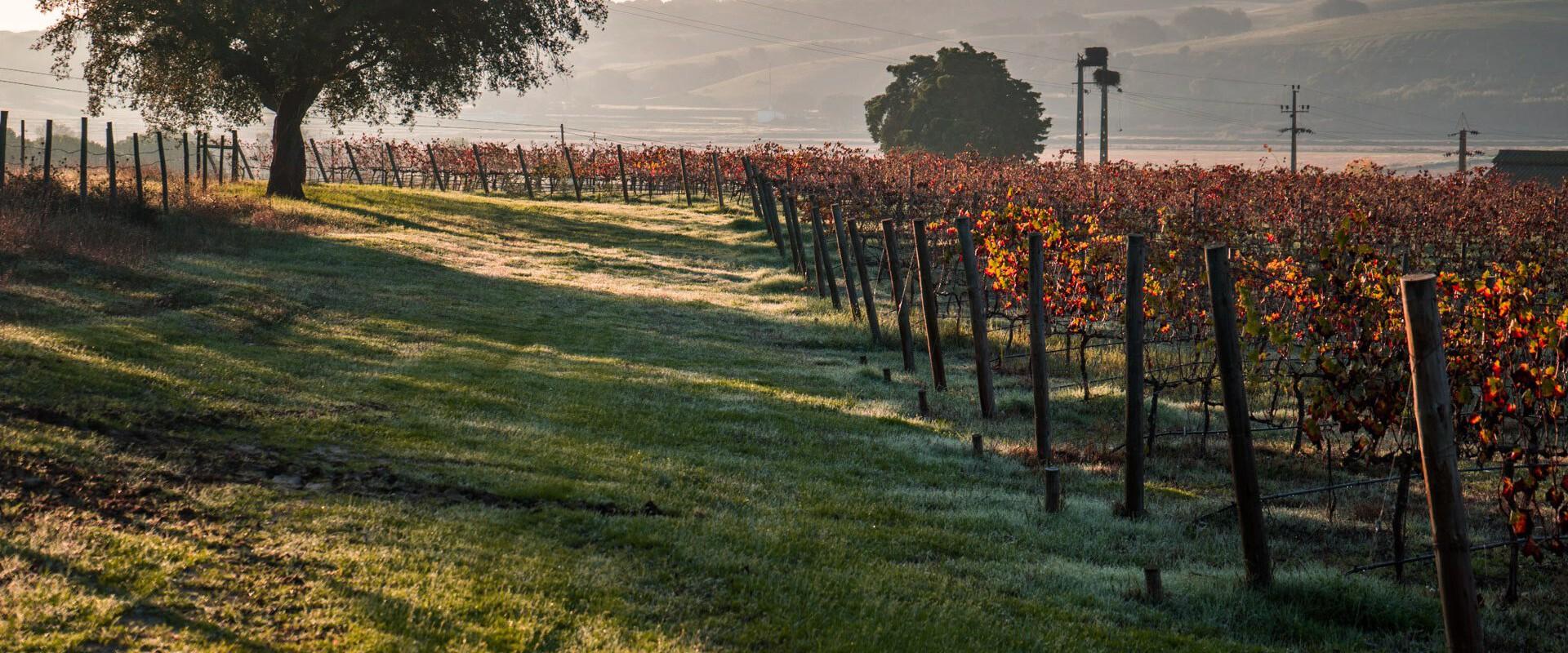 Wijnen uit de natuur